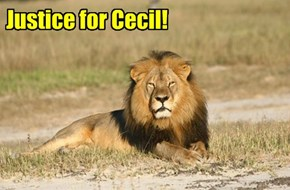 Justice for Cecil!