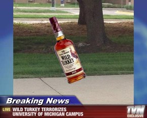 Breaking News - WILD TURKEY TERRORIZES  UNIVERSITY OF MICHIGAN CAMPUS