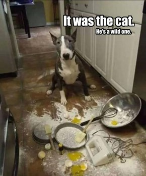 It was the cat.