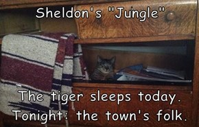 "Sheldon's ""Jungle""   The tiger sleeps today. Tonight: the town's folk."