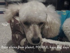 *Yes* Even aliens from planet, POODLE, have dog days