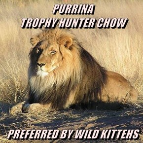 PURRINA                                       TROPHY HUNTER CHOW  PREFERRED BY WILD KITTEHS