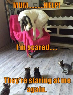 MUM..........HELP! I'm scared.....  They're staring at me again.