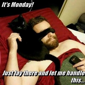 It's Monday!  Just lay there and let me handle this...