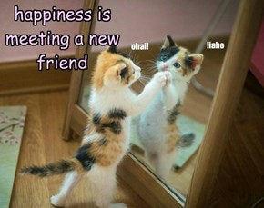 happiness is meeting a new friend