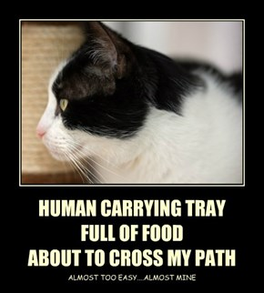 HUMAN CARRYING TRAY  FULL OF FOOD  ABOUT TO CROSS MY PATH