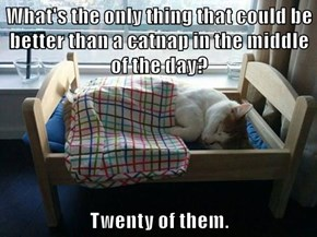 What's the only thing that could be better than a catnap in the middle of the day?  Twenty of them.