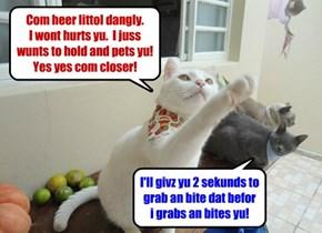 Sum kitties juss play diffrintly!