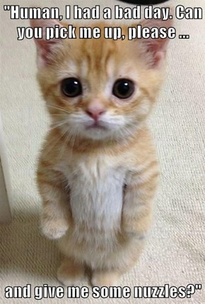 """""""Human, I had a bad day. Can you pick me up, please ...  and give me some nuzzles?"""""""