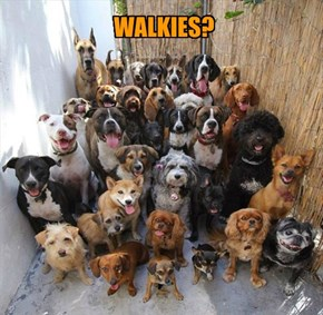 WALKIES?