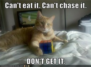 Can't eat it. Can't chase it.  DON'T GET IT.