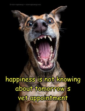 happiness is not knowing about tomorrow's  vet appointment