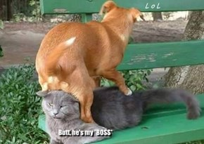I'm sure GLAD he's NOT my boss !!! :O