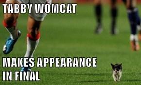 TABBY WOMCAT  MAKES APPEARANCE                    IN FINAL