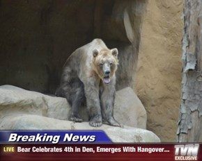 Breaking News - Bear Celebrates 4th in Den, Emerges With Hangover...