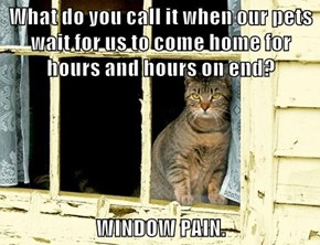What do you call it when our pets wait for us to come home for hours and hours on end?  WINDOW PAIN.