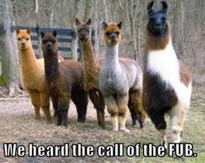 We heard the call of the FUB.