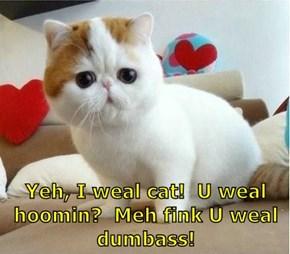 Yeh, I weal cat!  U weal hoomin?  Meh fink U weal dumb@ss!