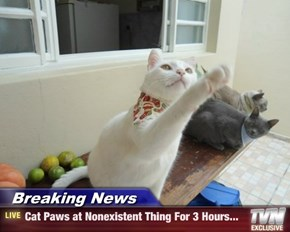 Breaking News - Cat Paws at Nonexistent Thing For 3 Hours...