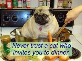 Never trust a cat who invites you to dinner.