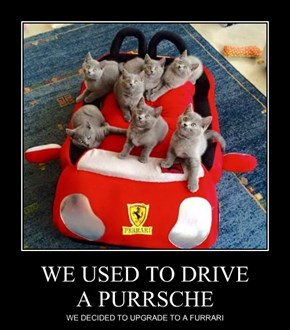 WE USED TO DRIVE A PURRSCHE