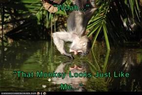 """Woah...""  ""That Monkey Looks Just Like Me..."""