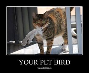 YOUR PET BIRD