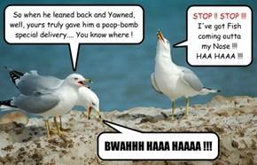 Seagull Humor