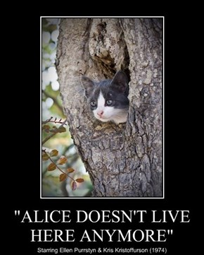 """""""ALICE DOESN'T LIVE HERE ANYMORE"""""""