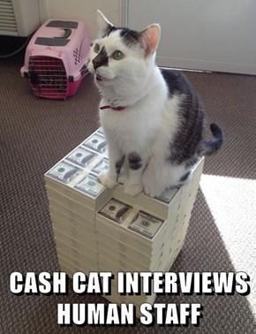 CASH CAT INTERVIEWS HUMAN STAFF