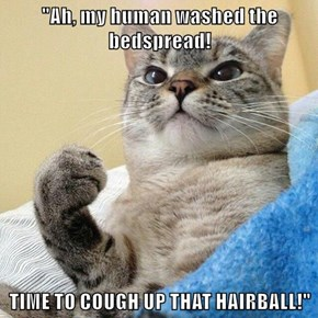 """Ah, my human washed the bedspread!  TIME TO COUGH UP THAT HAIRBALL!"""