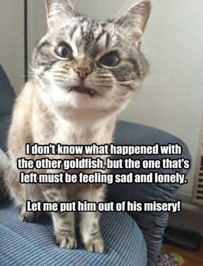 Goldie I has mysteriously gone missing.