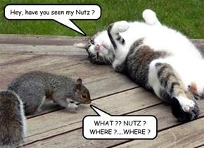 Sassy Cat's Revenge