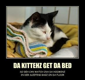 DA KITTEHZ GET DA BED