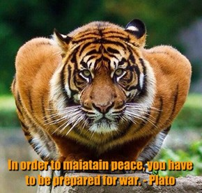 In order to maiatain peace, you have to be prepared for war. - Plato