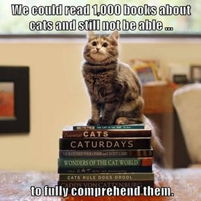 We could read 1,000 books about cats and still not be able ...   to fully comprehend them.