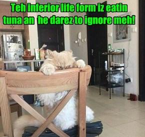 Teh inferior life form iz eatin tuna an  he darez to ignore meh!