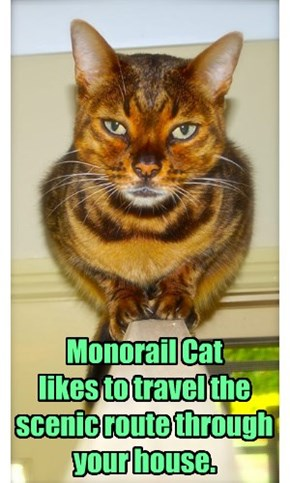 Monorail Cat  likes to travel the scenic route through your house.
