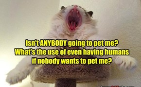 Isn't ANYBODY going to pet me?  What's the use of even having humans if nobody wants to pet me?