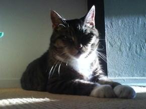 Miep Catches Last Sunrays Indoors 3/4