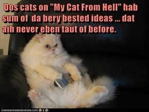 """Dos cats on """"My Cat From Hell"""" hab sum of  da bery bested ideas ... dat aih never eben taut of before."""