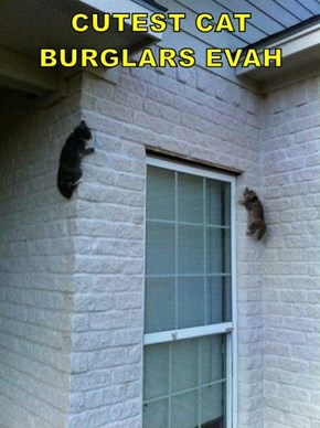 CUTEST CAT BURGLARS EVAH