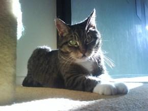 Miep Catches Last Sunrays Indoors 2/4