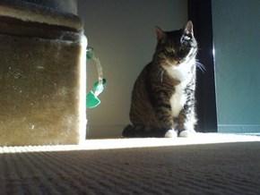 Miep Catches Last Sunrays Indoors 1/4