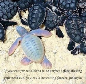 If you wait for conditions to be perfect before sticking your neck out.. you could be waiting forever; jus sayin'