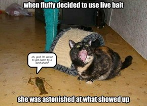 when fluffy decided to use live bait           she was astonished at what showed up