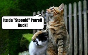 It be a crime to be stoopid!