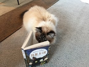 This Cat Is Working Through Her Summer Reading List