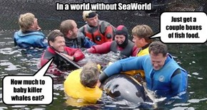 In a world without SeaWorld