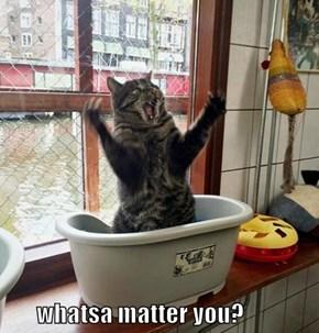 whatsa matter you?
